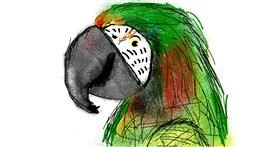 Parrot drawing by Lori