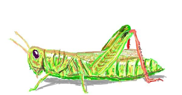 Grasshopper drawing by Sam