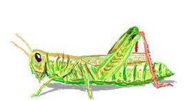 Grasshopper drawing by Sam