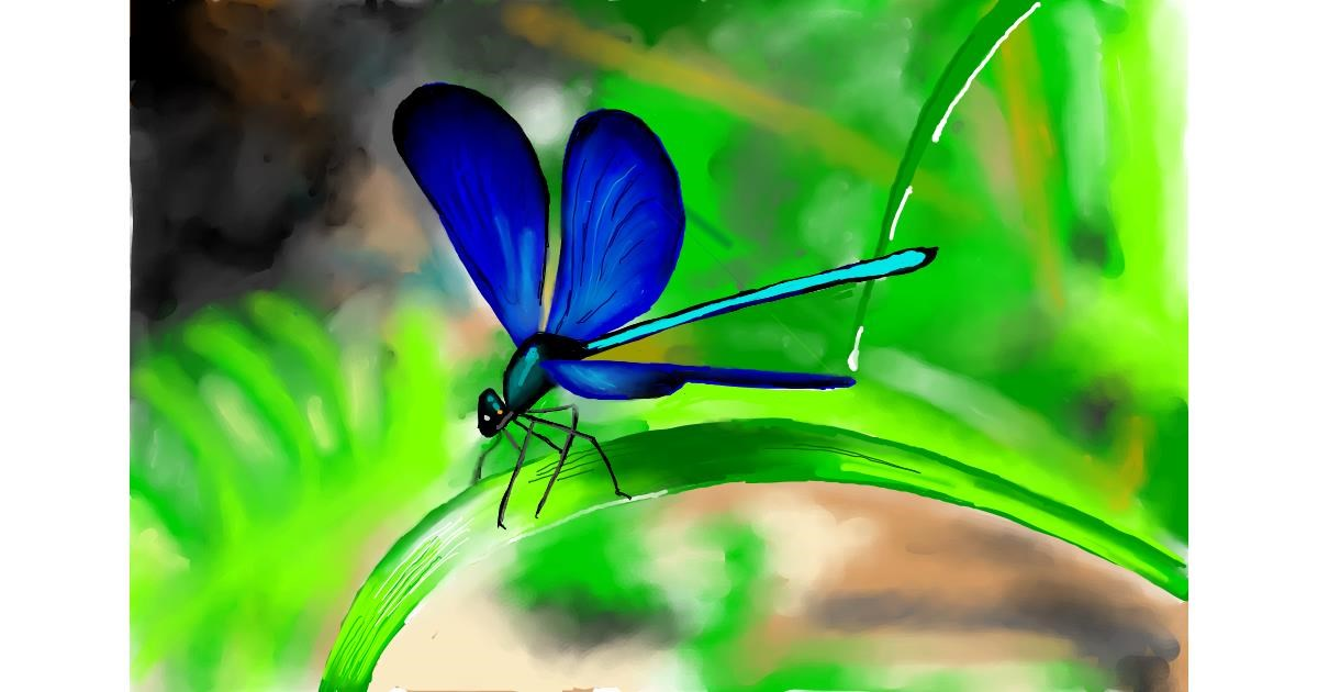 Drawing of Dragonfly by Bibattole