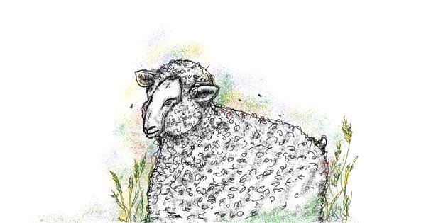 Sheep drawing by Babyone
