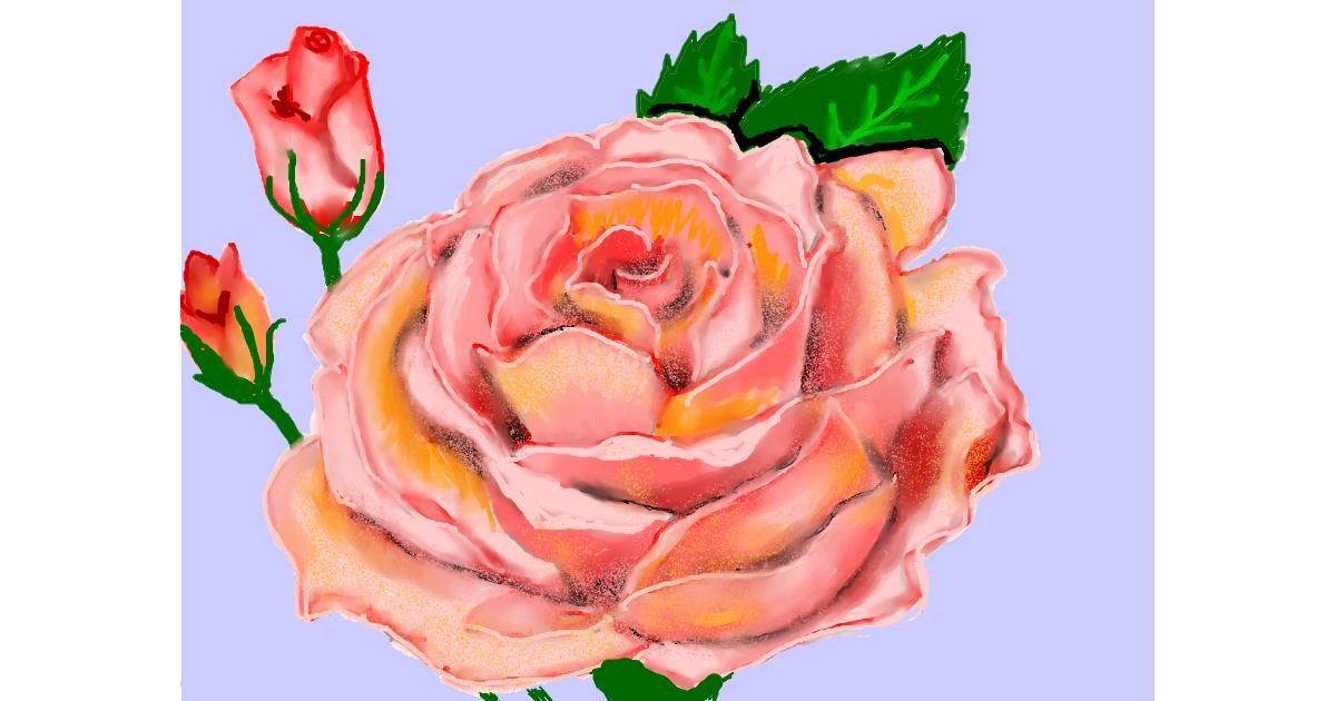 Rose drawing by SAM AKA MARGARET 🙄