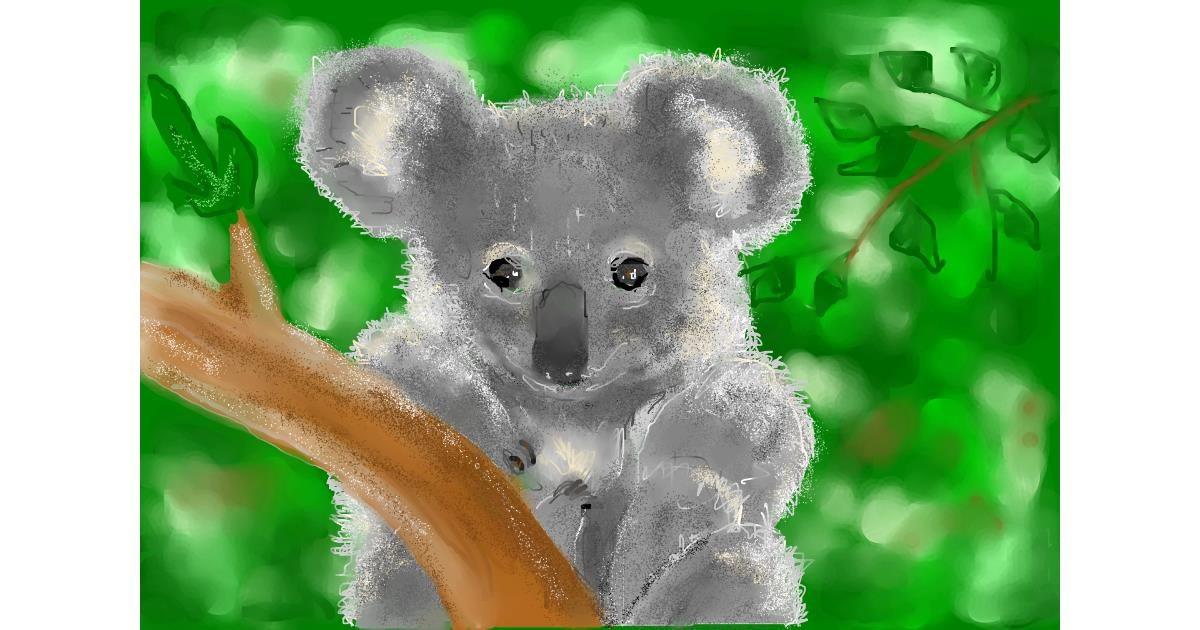 Drawing of Koala by Kira