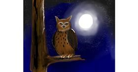 Owl drawing by Mitzi