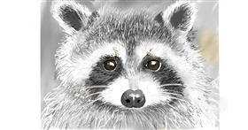 Raccoon drawing by GJP