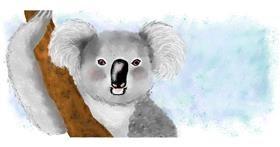 Drawing of Koala by Debidolittle