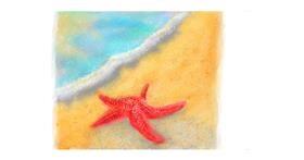 Drawing of Starfish by Sara