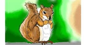 Drawing of Squirrel by Tim