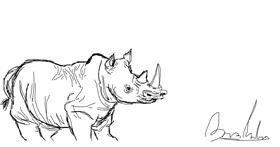 Rhino drawing by the diaz guy