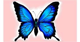 Butterfly drawing by Rush