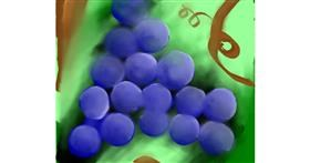 Grapes drawing by Valerie