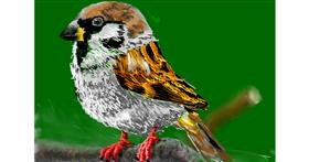 Sparrow drawing by teidolo