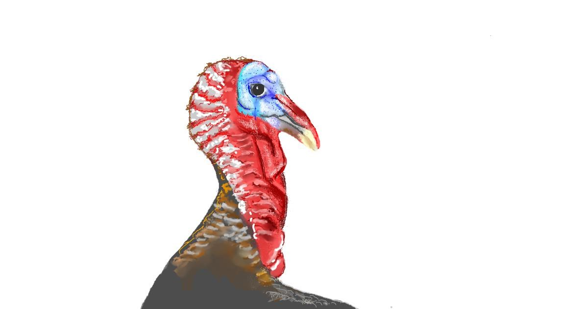 Turkey drawing by GJP