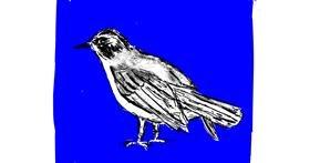 Bird drawing by Lsk