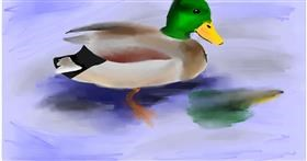 Drawing of Duck by Ryu