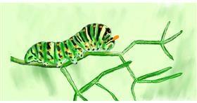 Drawing of Caterpillar by Humo de copal