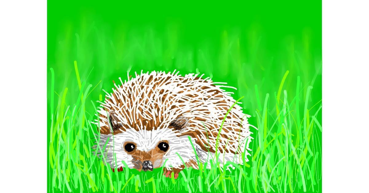 Hedgehog drawing by Sam