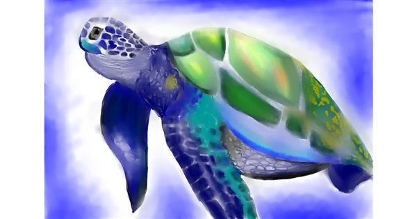 Sea turtle drawing by Jan