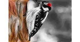 Drawing of Woodpecker by Soaring Sunshine