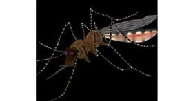 Drawing of Mosquito by Shalinee