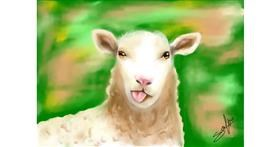 Drawing of Sheep by Sophie_draw24