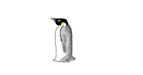 Penguin drawing by coconut