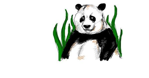 Panda drawing by Bob