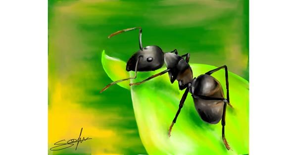 Ant drawing by Sophie_draw24