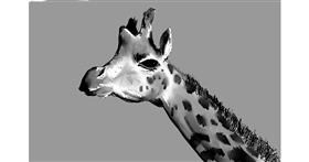 Giraffe drawing by Rak