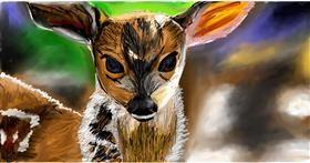 Drawing of Deer by Soaring Sunshine