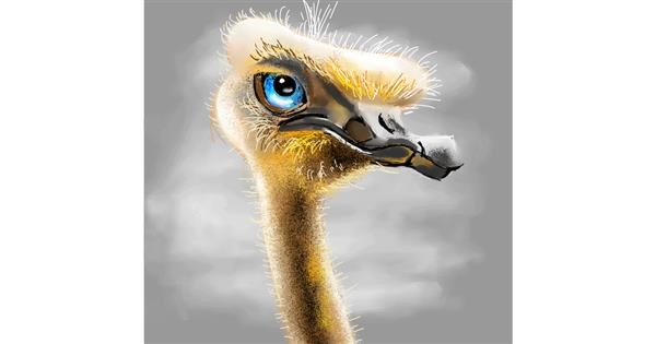 Ostrich drawing by Claria