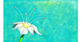 Flower drawing by Sam