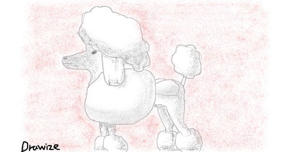 Poodle drawing by cottoncloud7