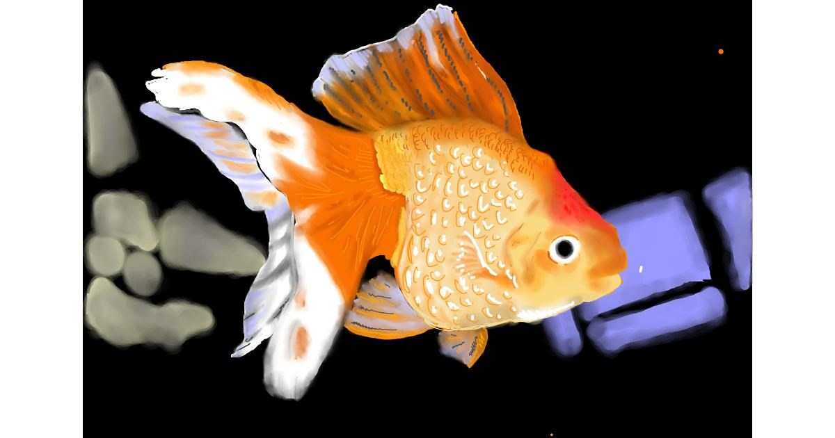 Drawing of Goldfish by Bibattole