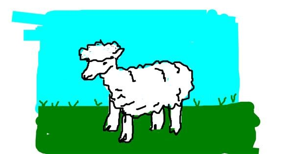 Sheep drawing by m