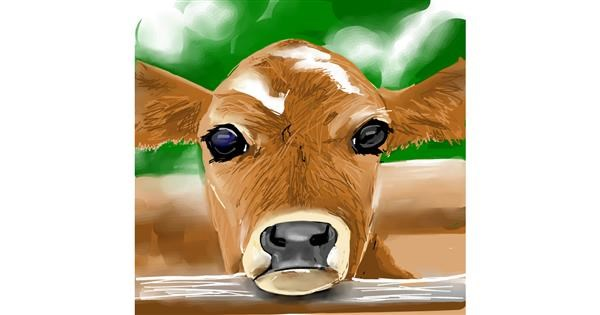 Cow drawing by Rose
