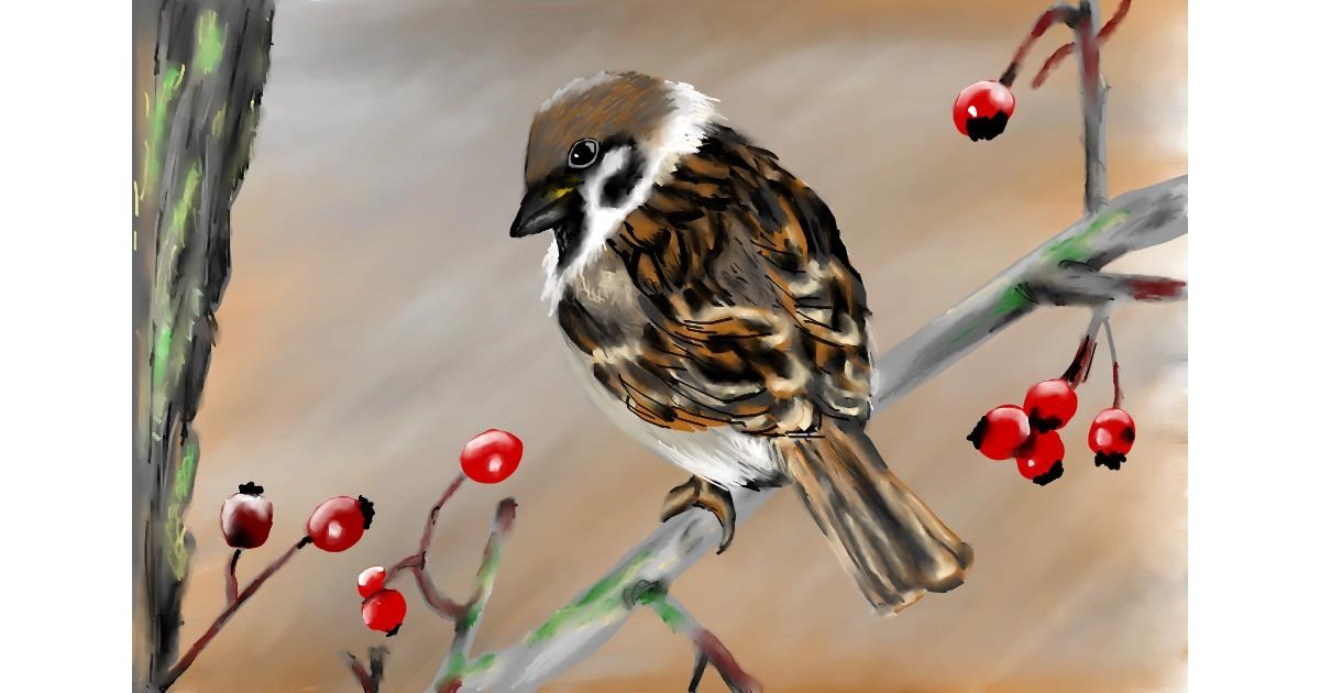 Sparrow drawing by RadiouChka