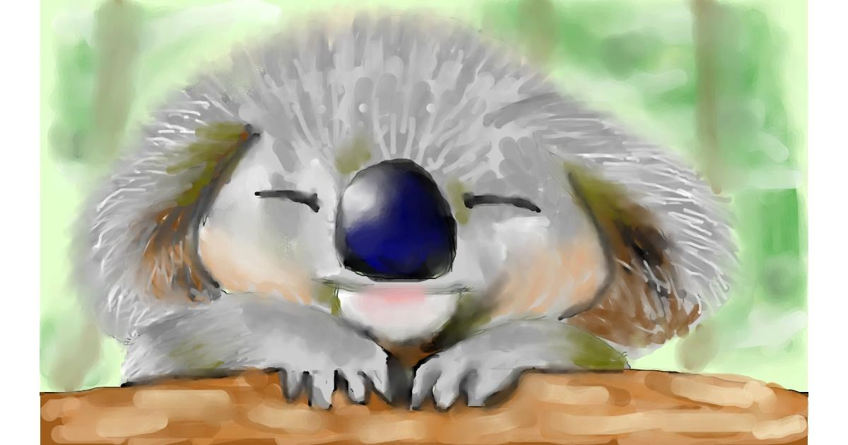 Drawing of Koala by Zi