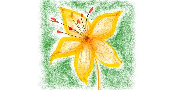 Lily Flower Drawing Gallery And How To Draw Videos
