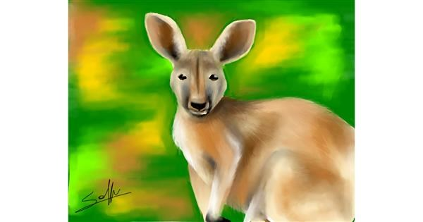 Kangaroo drawing by Sophie_draw24