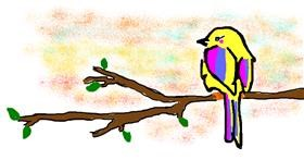 Bird drawing by Rosa