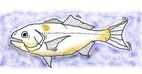 Fish drawing by Chloe