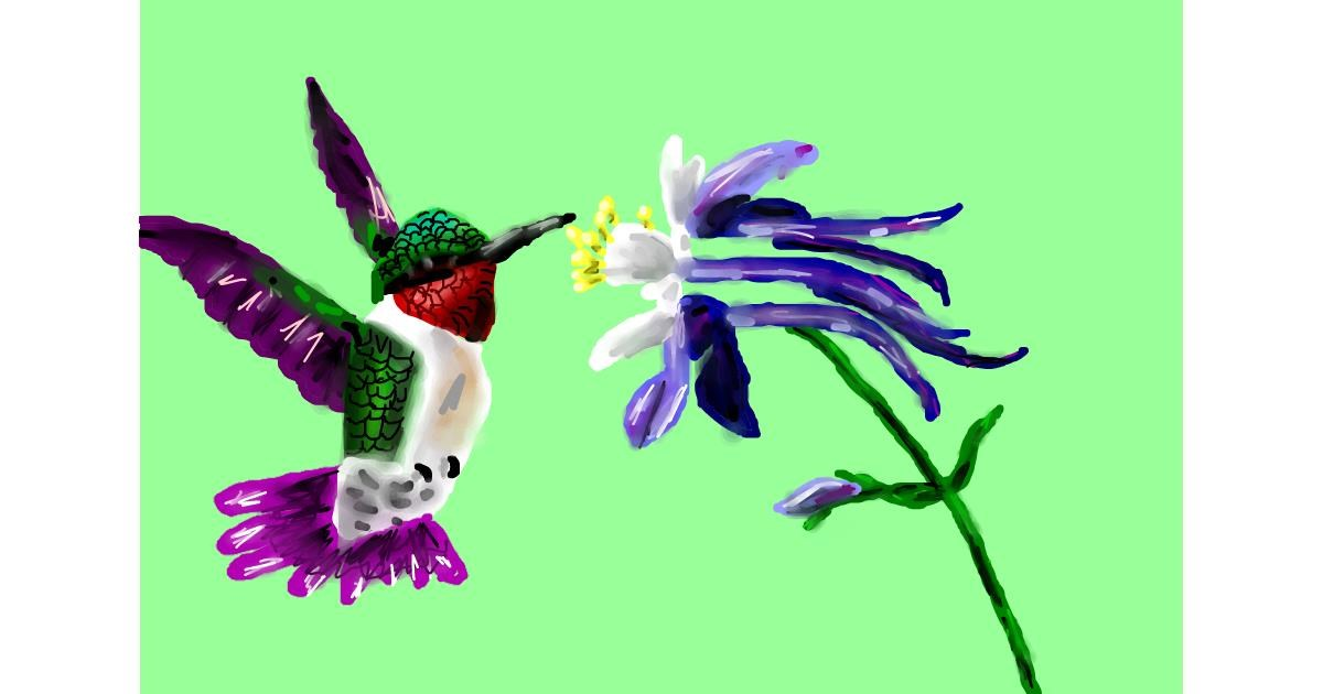 Hummingbird drawing by Soaring Sunshine