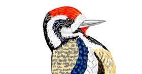 Drawing of Woodpecker by GJP