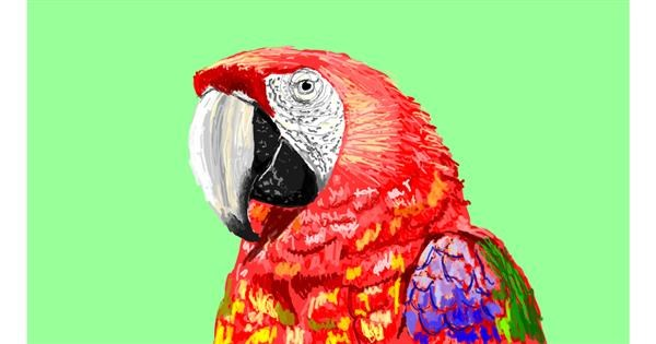Parrot drawing by Sam