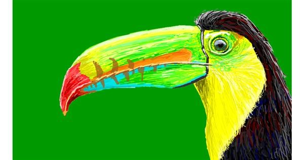 Toucan drawing by Sam