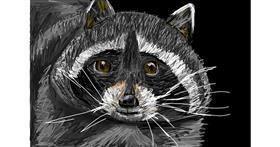 Raccoon drawing by Soaring Sunshine