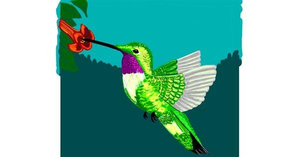 Hummingbird drawing by Geo-Pebbles