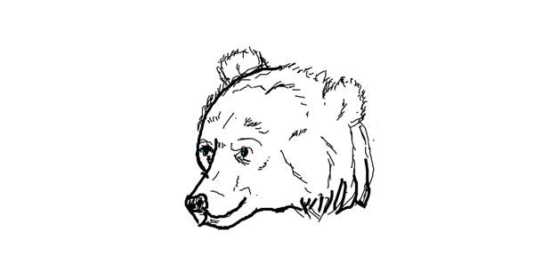 Bear drawing by Anonymous