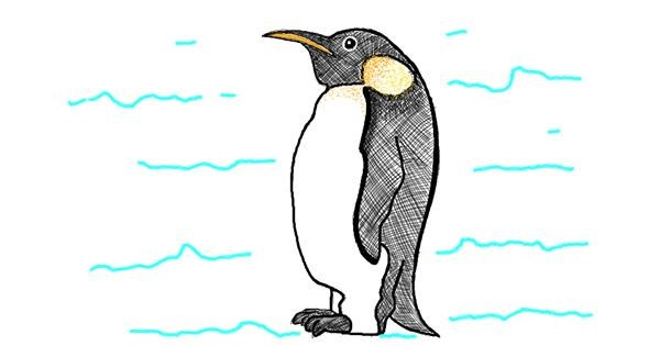 Penguin drawing by Ariaria